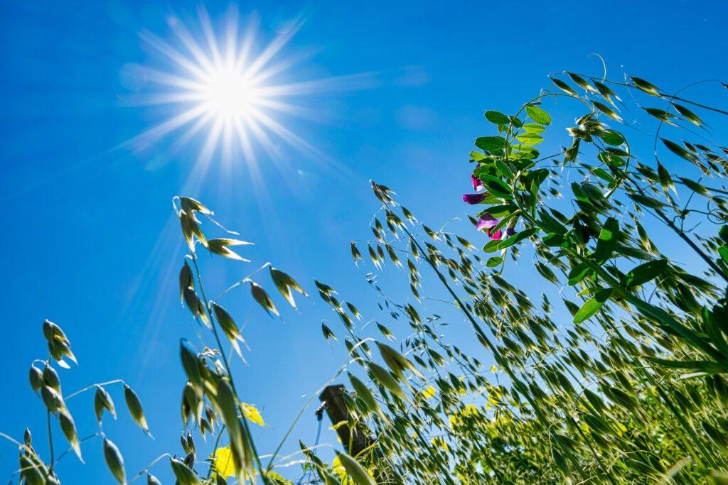 Il sole alto nel cielo irradia i campi di fiori che aiutano i vigneti della Barchessa a mantenere il miglior ecosistema per la matuazione dell'uva.