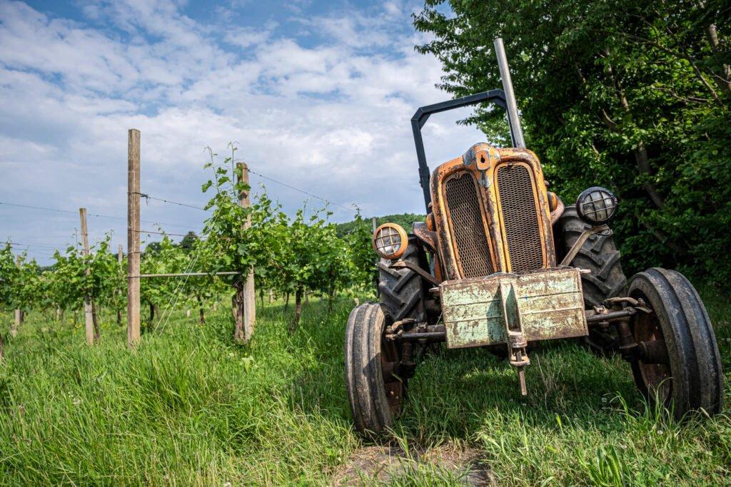 Il vecchio trattore Fiat Agri usato per le vendemmie dei vigneti di Cantina Barchessa Loredan a Selva del Montello.