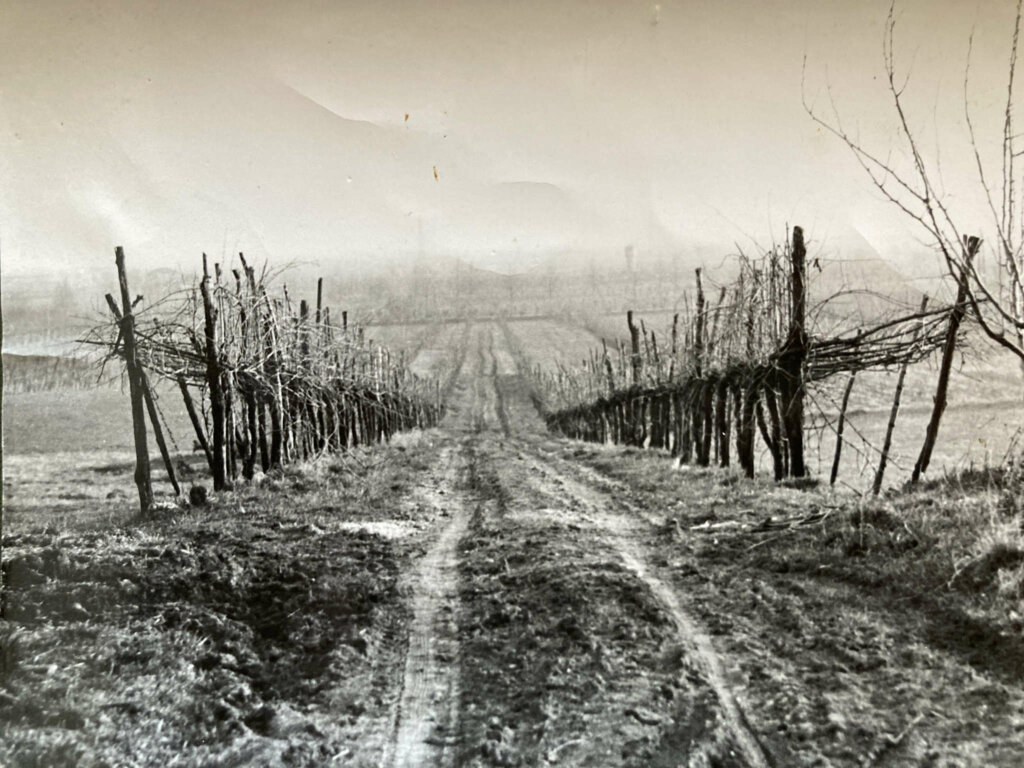 La strada di collegamento che da Volpago giungeva a Selva del Montello attraverso i campi della Cantina Barchessa Loredan.