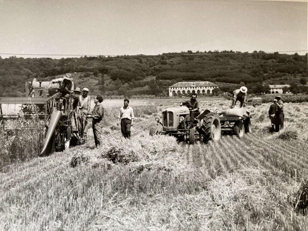 Il Conte Marco Loredan coordina il lavoro nei campi di frumento di fronte al Montello e alla Barchessa, visibili sullo sfondo.