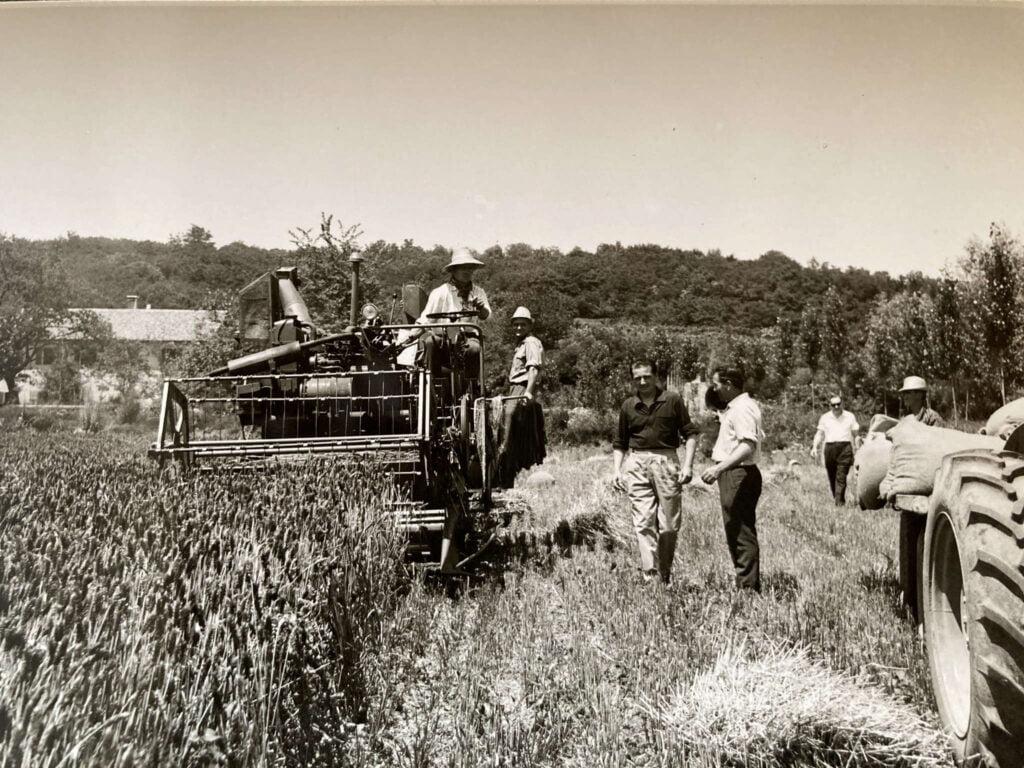Il conte Marco Loredan al lavoro nei campi con i suoi collaboratori durante la falciatura del frumento.